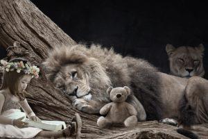 Höhle des Löwen