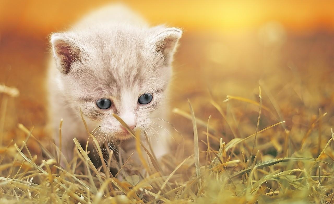 Ein Kätzchen kommt gegangen
