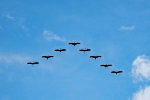 Alle Vöglein fliegen hoch