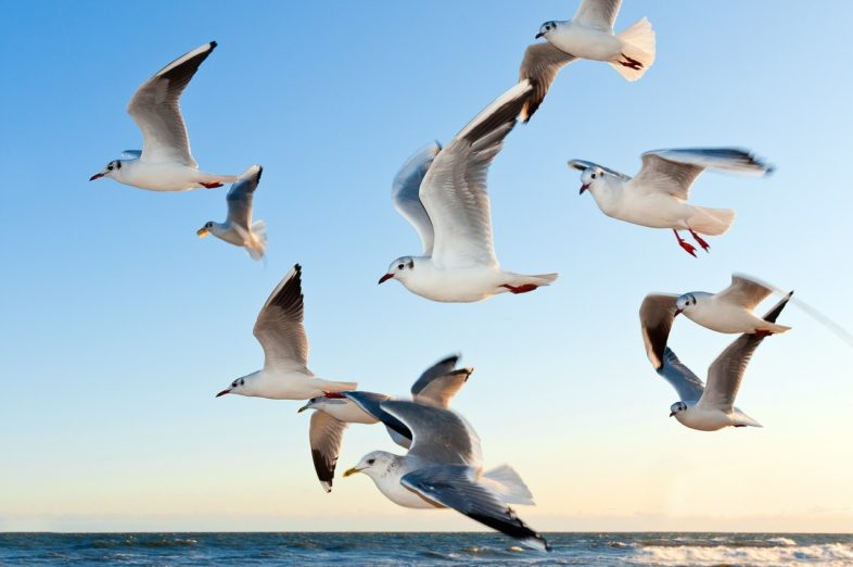 Vogel und Vogelfänger