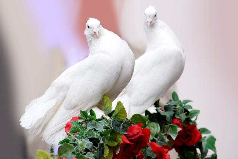 Vogel wollte Hochzeit machen