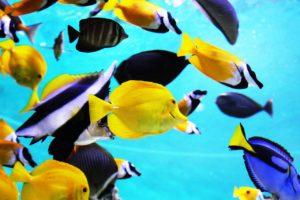 zehn kleine fische lied